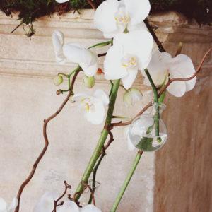 Composition Florale D'orchidée Décorée Par Elisabeth Delsol.