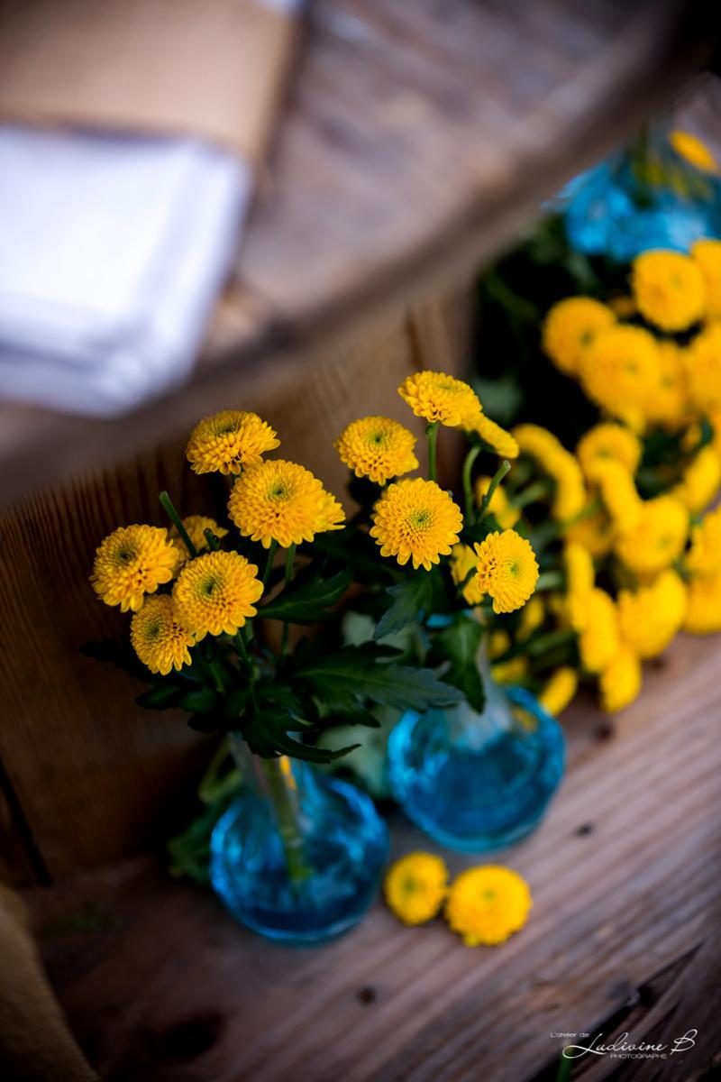 Fleurs du mois de mai pour mariage et événement champêtre et bouquet de décoration en matricaire.