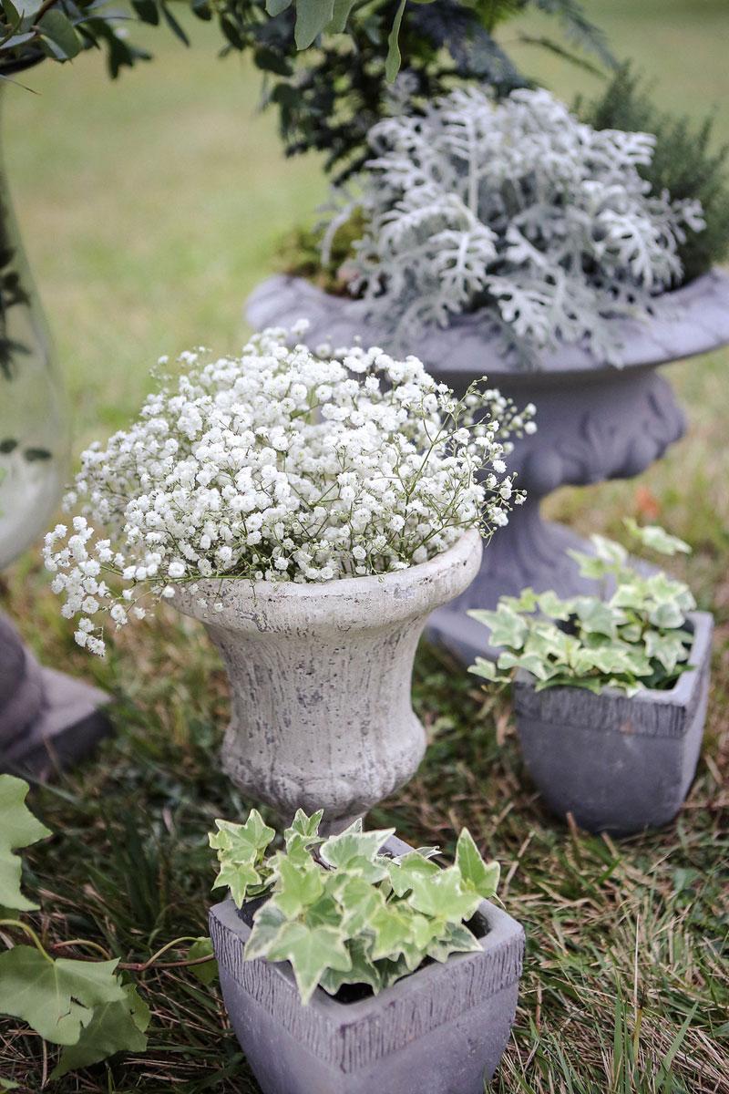 Fleurs du mois de mai pour mariage et événement champêtre et bouquet de décoration en gypsophile.