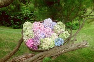 Panière De Fleurs Fraîches Et Hortensia Du Jardin Pour Un Mariage Et Réception Dans La Nature.