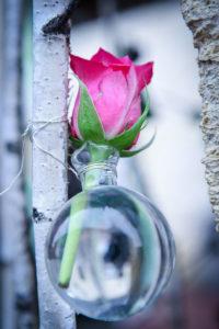 Rose Et Soliflore Poure Déco Sur Janvier Et L'hiver.