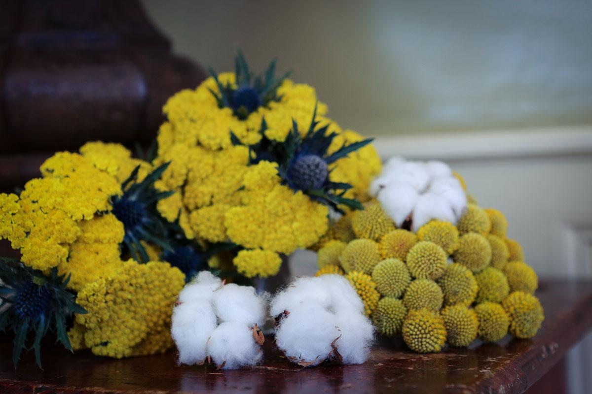 La fleur de craspedia jaune en bouquet avec du coton blanc.