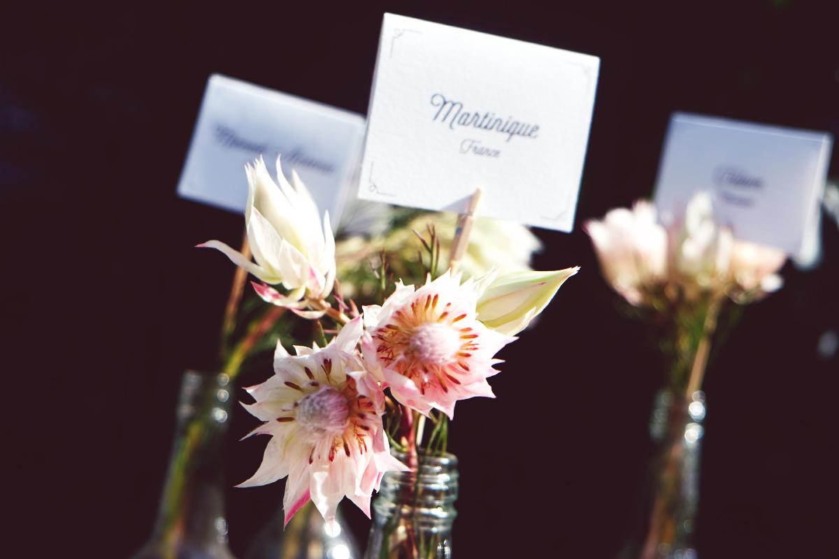 Photo de fleur et serruria florida de couleur blanche et rose.